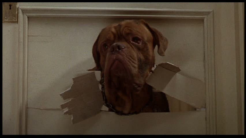 FILM: Turner and Hooch (guest post by Jan) | The House of Two Bows ...