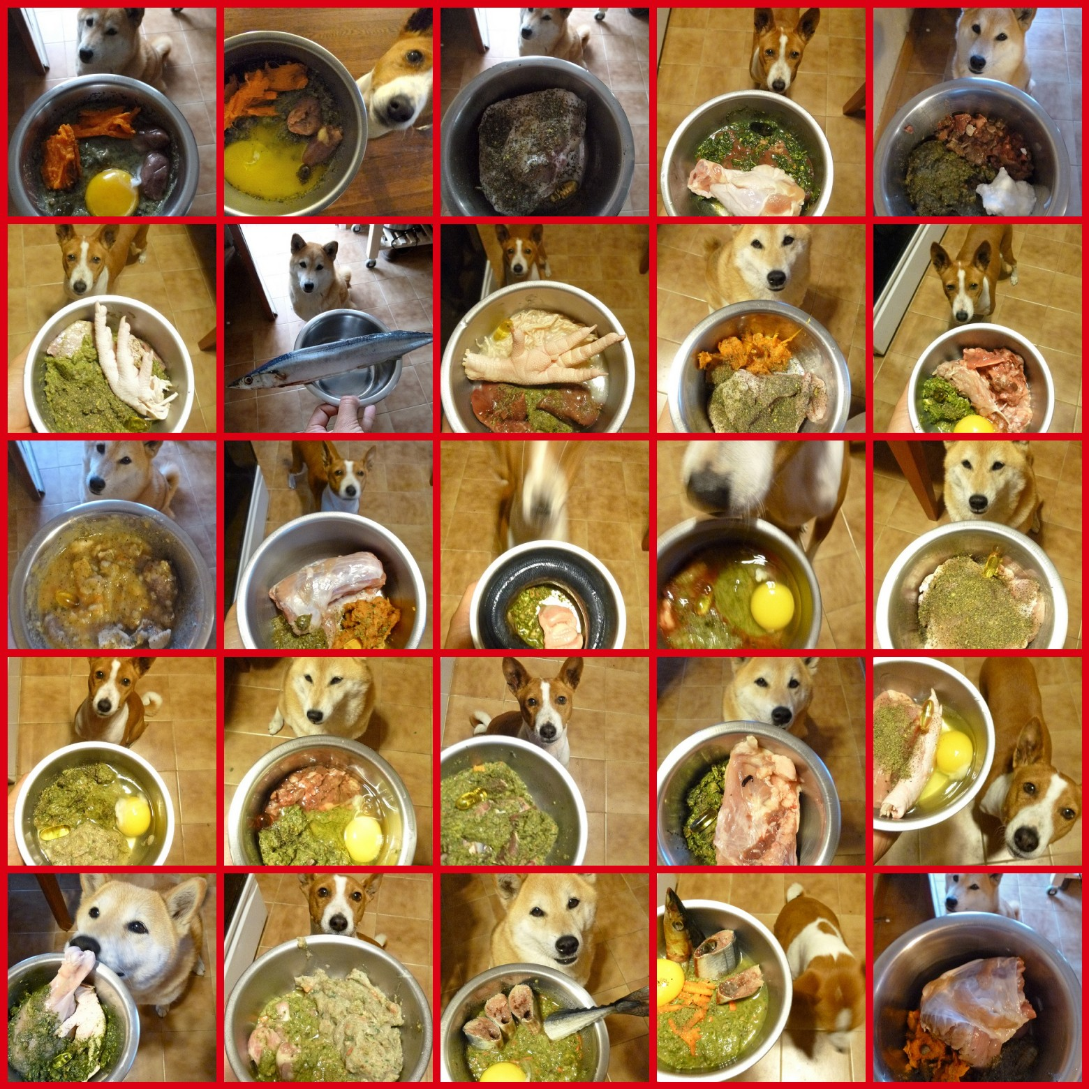 Dehydrated dog food the house of two bows dinner forumfinder Gallery