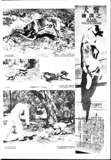 LiangYou111-Nov-1935-22-23-TrainingPoliceDogsp1