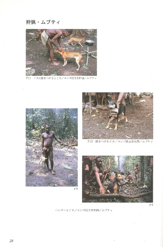 Hunting dogs of the Mbuti