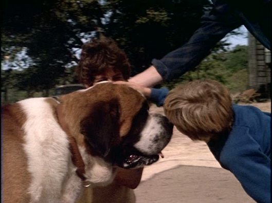 kids, this is NOT how you greet a strange dog -- rabid or not