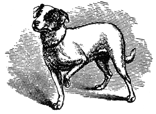 """Small dog watching a cat on a table"" -- Polly, Darwin's last dog"
